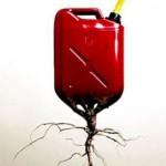 Biocarburanti: presto arriverà il combustibile ottenuto dalla canna nostrana