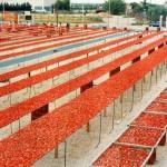 Nuovo impianto a Maccastorna per riscaldamento da scarti di lavorazione pomodori