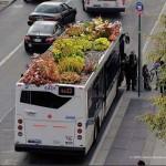 Nuovi giardini pensili sugli autobus da New York