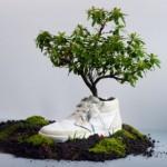 Dall'Olanda: Ecco le scarpe Biodegradabili