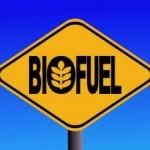Biocombustibili, uno studio rivela i danni che potrebbero creare