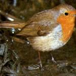 Anche gli uccelli risentono dei cambiamenti climatici?