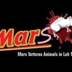 Ecco come il cioccolato sevizia gli animali: Mars e le torture