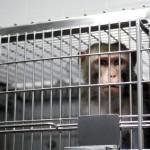 """Attivisti animalisti alla stregua di terroristi, l' F.B.I. scende in campo con i """"cattivi"""""""