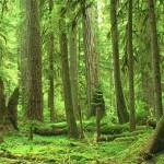 La foresta di Molai, un piccolo angolo di paradiso in India