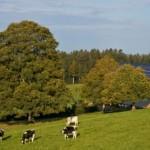 """""""Agriturismo e sostenibilità"""": il contest che premia l'agriturismo più sostenibile"""