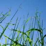 Biowert: fertilizzanti e plastica realizzati con l'erba