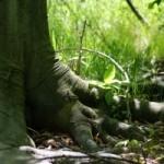 Nuove fonti di energia grazie a piante e batteri