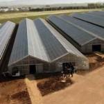 Sardegna: la serra fotovoltaica più grande del mondo, un anno dopo