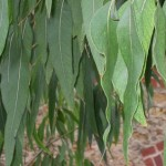 Sardegna: imprese agricole unite per la produzione di energia da biomassa