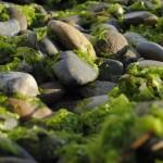 Dalla Germania arriva l'isolante per l'edilizia realizzato con le alghe