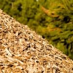 Rinnovabili elettriche: previsti cambiamenti per il settore delle biomasse