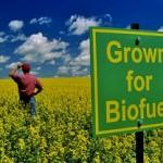 Biocarburanti, una priorità per Airbus, Air Canada e BioFuel Net Canada