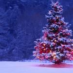 Alberi di Natale: i consigli di Hera per smaltirli