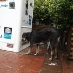 Sfamare i cani randagi riciclando plastica