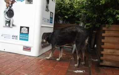 sfamare i cani