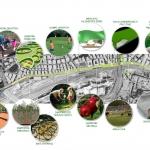 Coltiviamo la città: il progetto di orti urbani a Roma