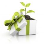 Ecodecalogo per un Natale sostenibile